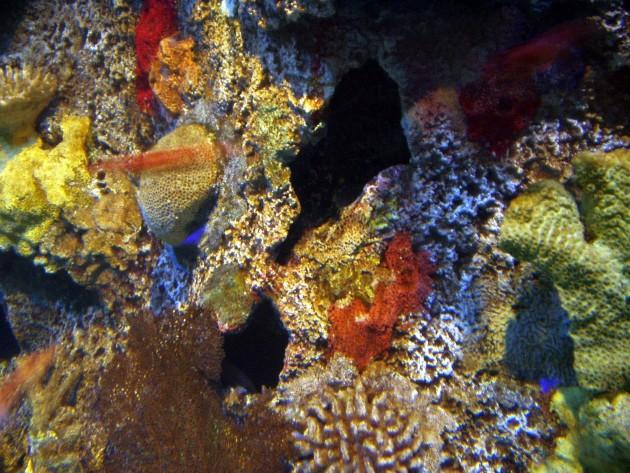 Assorted living corals 630x473