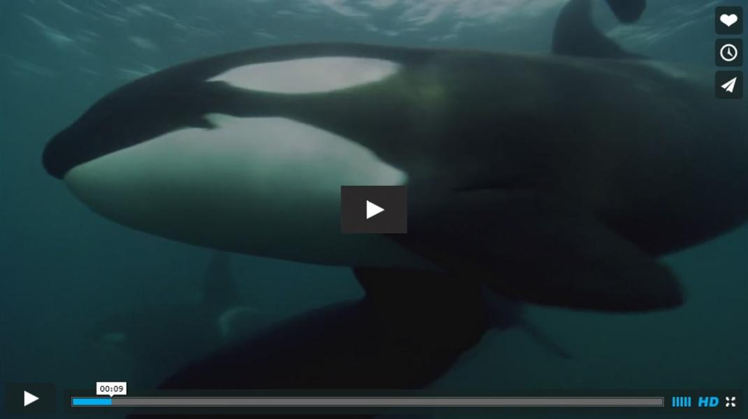 Blackfish bande annonce 1