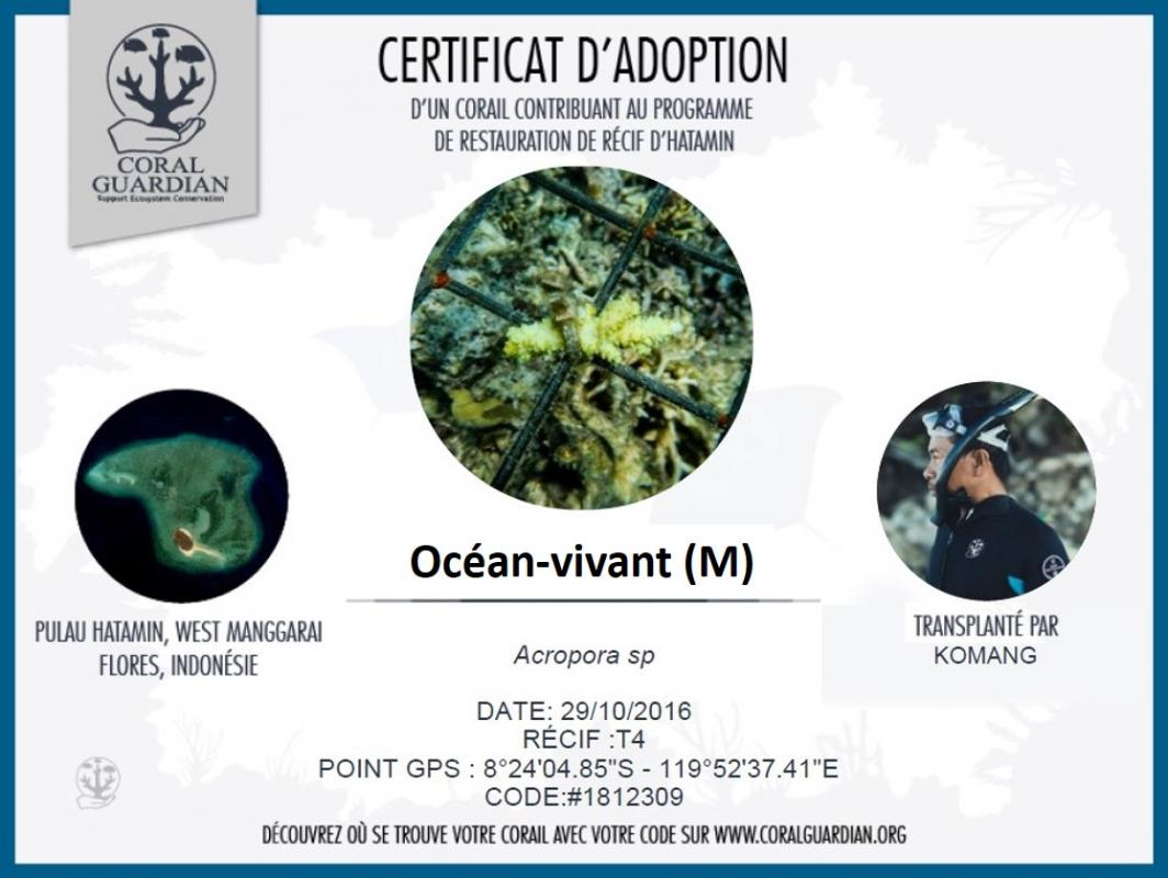 Certificat adoption corail m