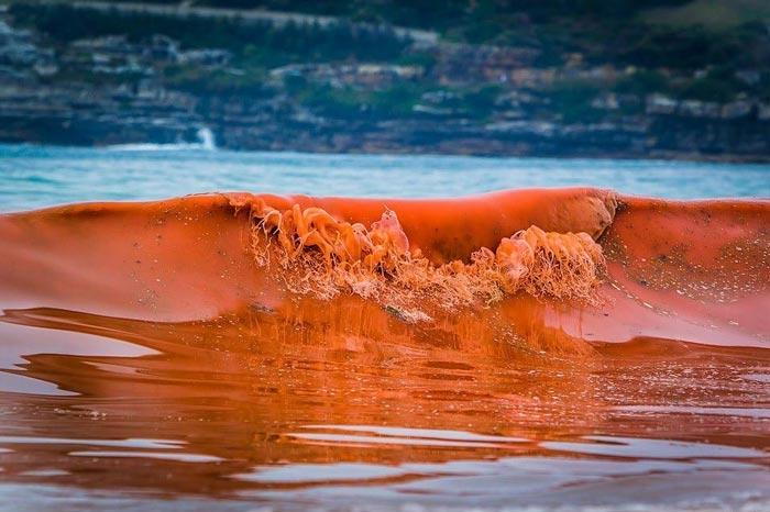 Red tide bloom