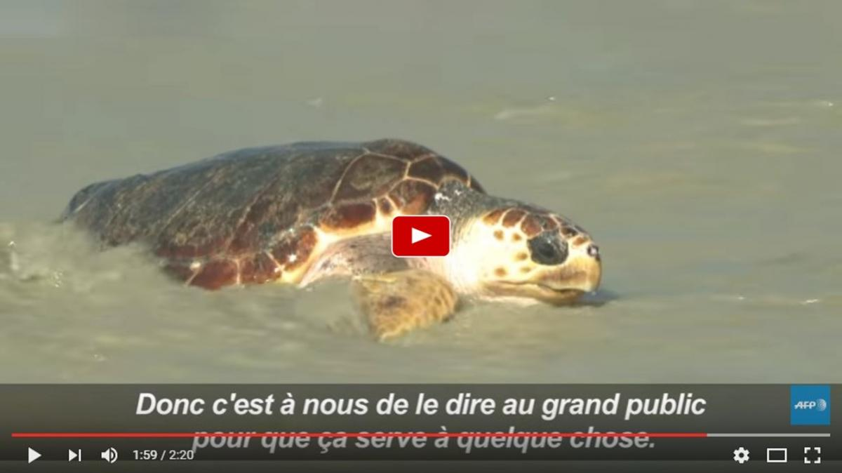 Remise a l eau tortues ile de re