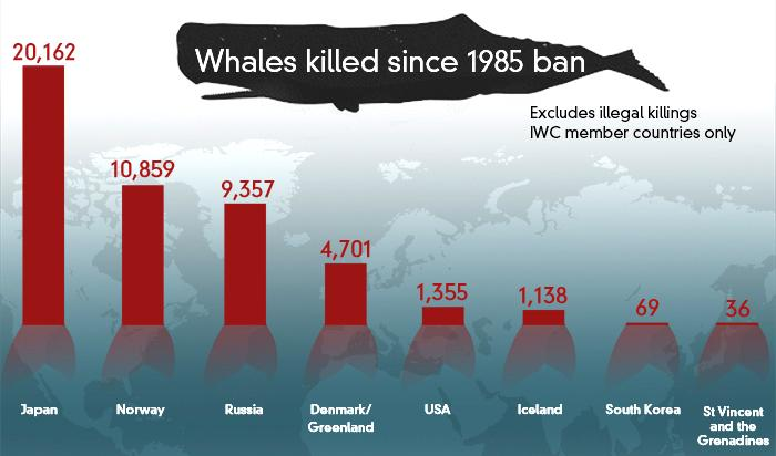 Whales killed since 1985 data