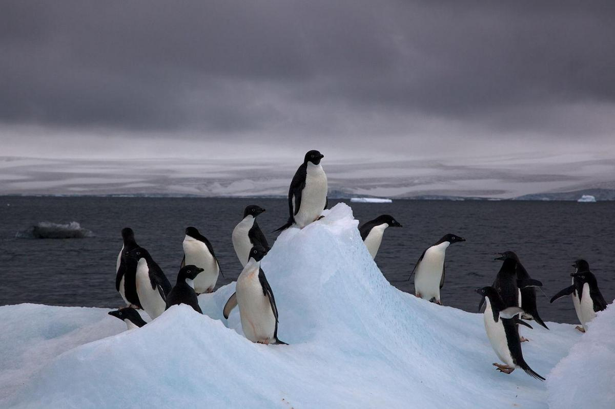1280px adelie penguins on iceberg