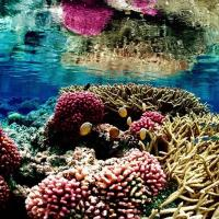 800px colorful underwater landscape of a coral reef