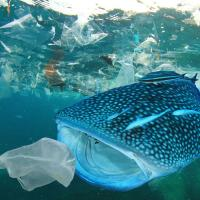 88528b02fb 50147695 pollution plastique ocean
