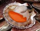Coquille st jacques 3