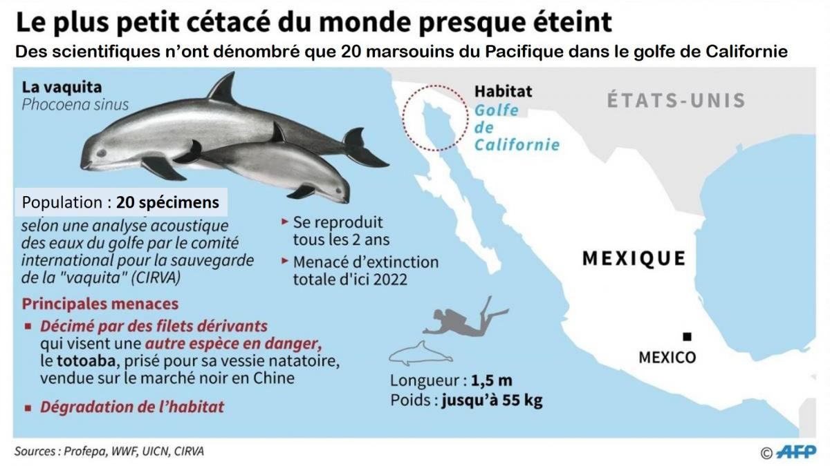 Estimation ecosystemique de la vaquita