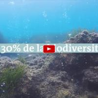 L acidification des oceans menace la faune marine