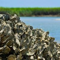 Oyster research 1024x587 e1518686524808